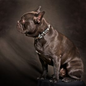 Beautiful Bridles - My8 dog collar